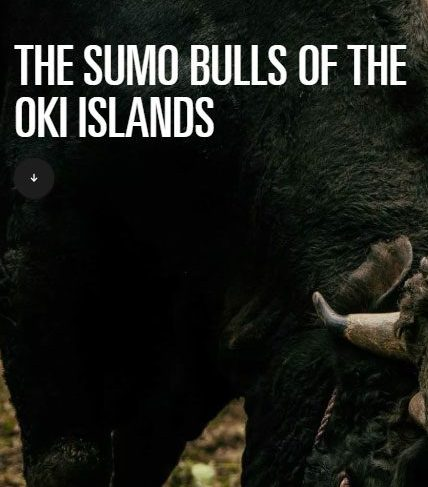The Sumo Bulls of the Oki Islands - Roads & Kingdoms